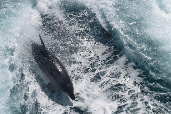 В Атлантическом океане из-за женских стрингов погиб дельфин