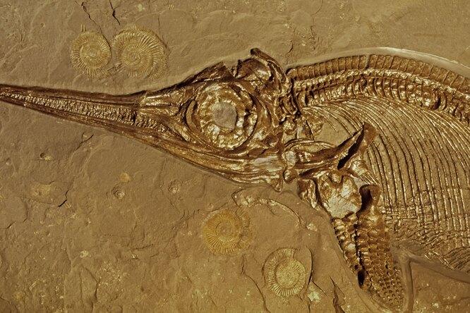 Ихтиозавр: каких размеров достигало одно изсамых больших существ завсю историю планеты