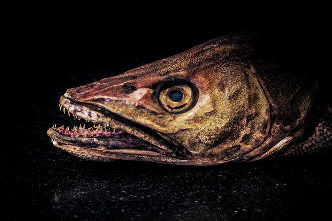 На берег Тихого океана выбросило рыбу-монстра