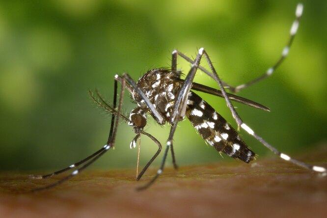 В Роспотребнадзоре предупредили опоявлении комаров-переносчиков лихорадки Западного Нила
