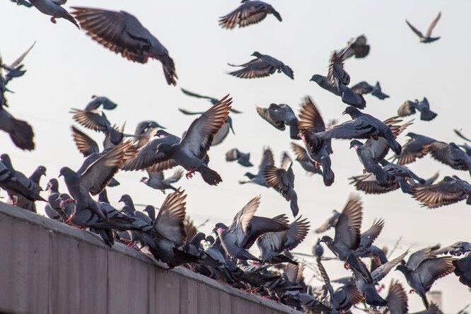 В Китае человек впервые заразился птичьим гриппом H10N3