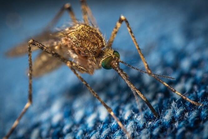 Изобретена одежда, защищающая отукусов комаров. Эффективность — 100 %