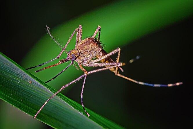 Самый сладкий: 6 признаков, что комары укусят именно вас