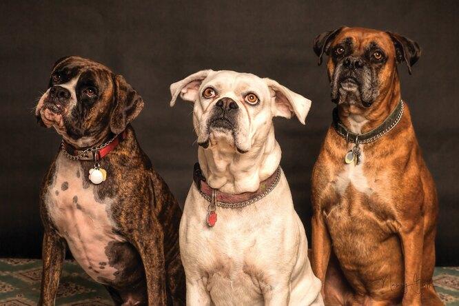 Видео: забавная реакция трех собак наигрушку развеселила пользователей сети