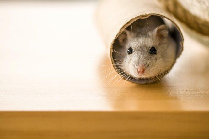 Как щекотка влияет наэмоциональное состояние животных? Результаты эксперимента