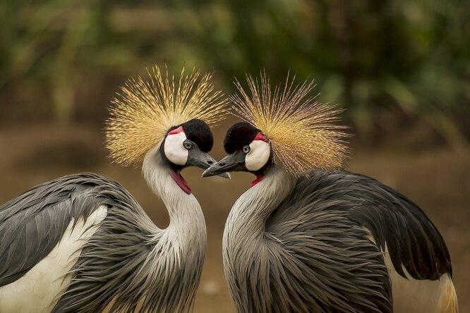 10 интересных нелетающих птиц наших дней