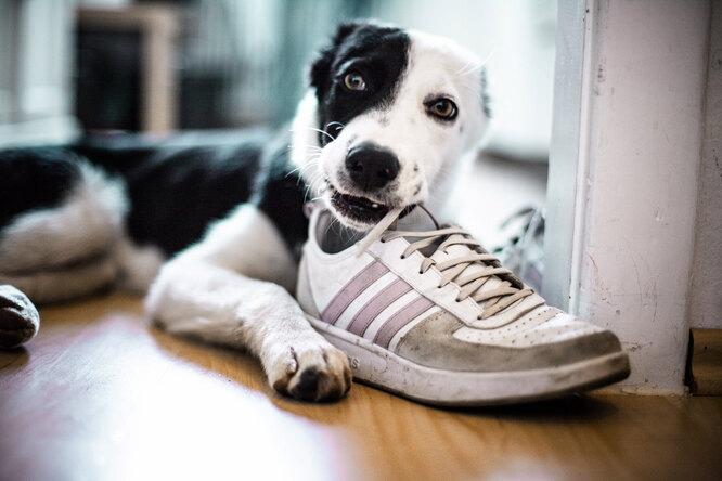 8 полезных лайфхаков, которые должен знать каждый владелец собаки