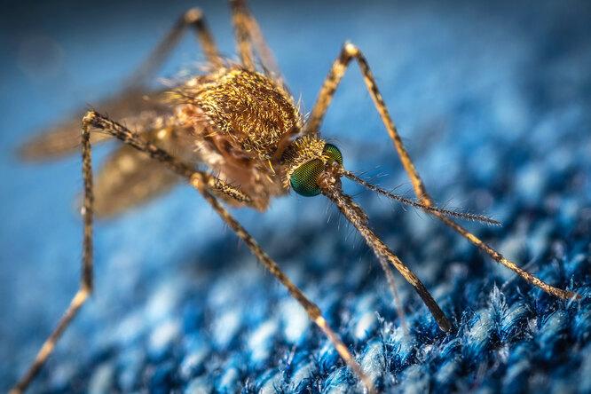 Почему комары кусают человека, икак отних защититься?