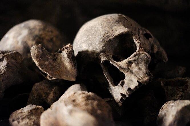 В Латвии прираскопках нашли древнейший штамм чумы — ему больше пяти тысячелетий