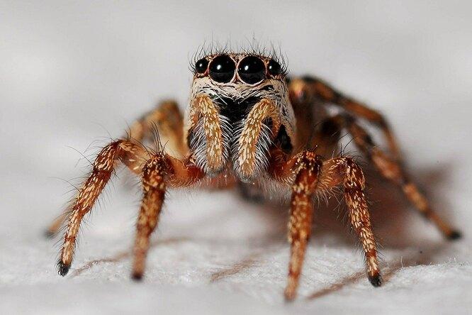 Почему нельзя убивать пауков, живущих вквартирах идомах: объясняют ученые