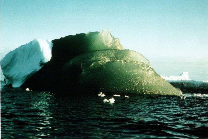 Почему лед вАнтарктиде зеленеет истоит ли этого опасаться?