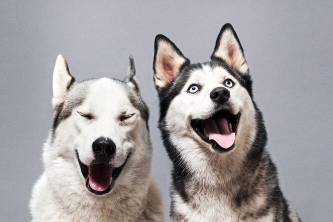 10 пород собак, которым неместо вдоме