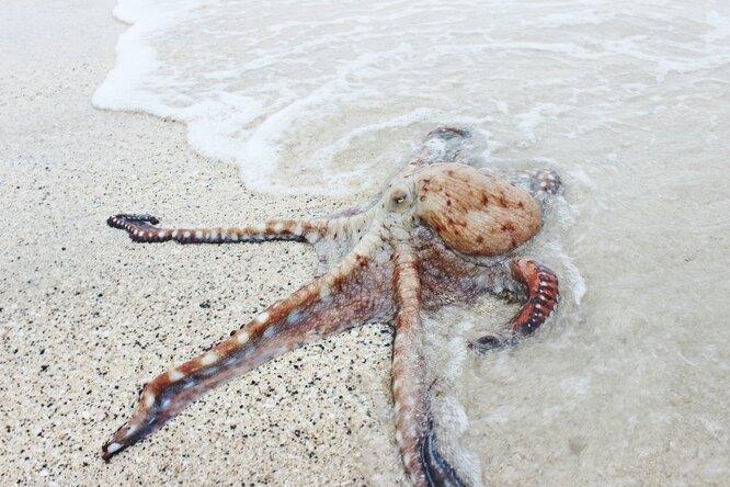 «Реально зарегистрированы»: океанолог рассказал, где насамом деле обитают подобия Кракена