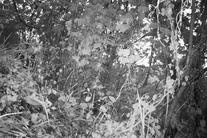 Где нафото прячется тигр