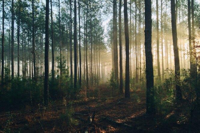 Почему высадка новых лесов может оказаться бесполезной