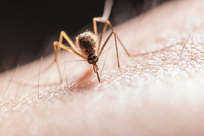 5 народных средств против комариных укусов