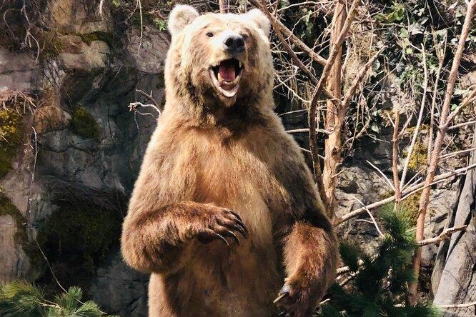На Камчатке дикий медведь устроил разминку натурнике