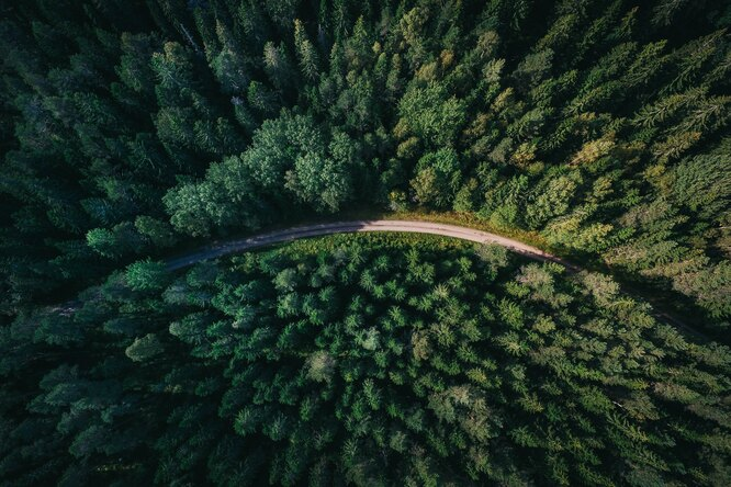 Apple выделила $200 миллионов навосстановление лесов