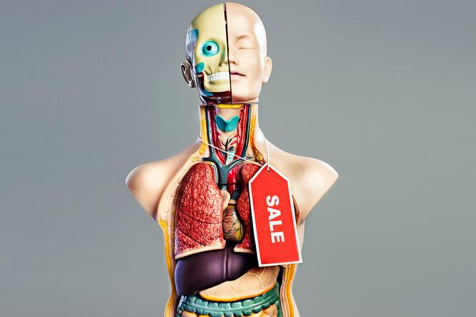Сколько стоят человеческие органы: прайс-лист отроговицы искелета допочек иволос