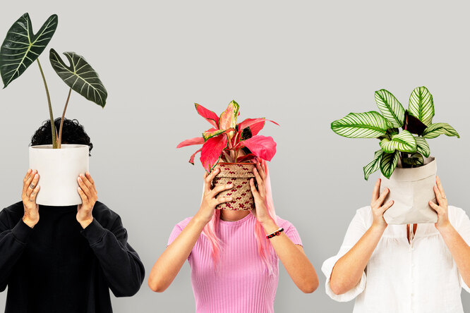 Как комнатные растения влияют наздоровье: 7 поводов поставить вофисе фикус