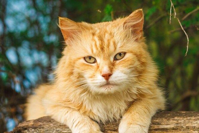 Доказано, что кошки хорошо понимают человека