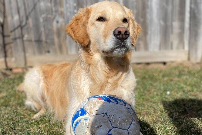Видео: собака забила гол во время футбольного матча истала популярной