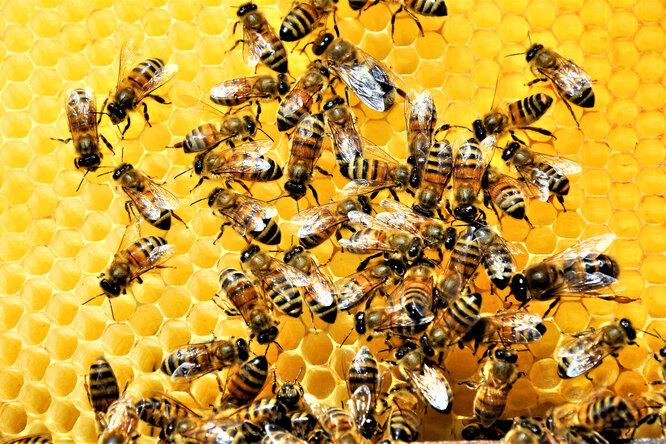 10 доказательств того, что пчелы крайне важны длянашей планеты