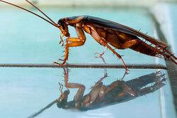 Откуда берутся тараканы?