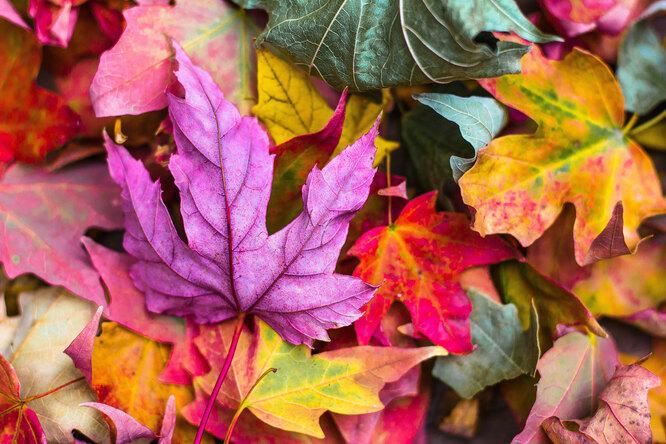 Чем опасна опавшая листва?