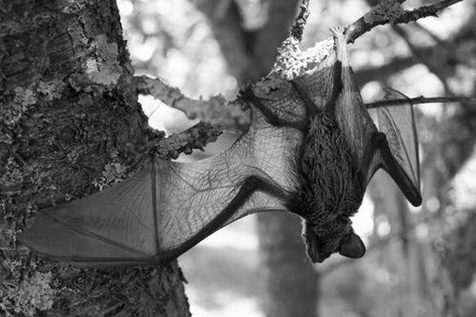 10 самых необычных летучих мышей со всего мира