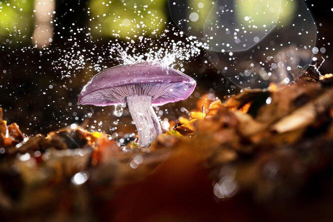 Как заготовить грибы назиму?