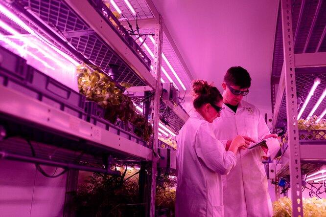 В Калининграде создали криопродукты, которые сохраняют иммунитет присмене климатического пояса